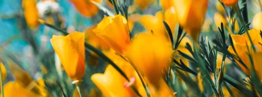 Želite li poslati cvijeće kod kuće? Objašnjavamo kako