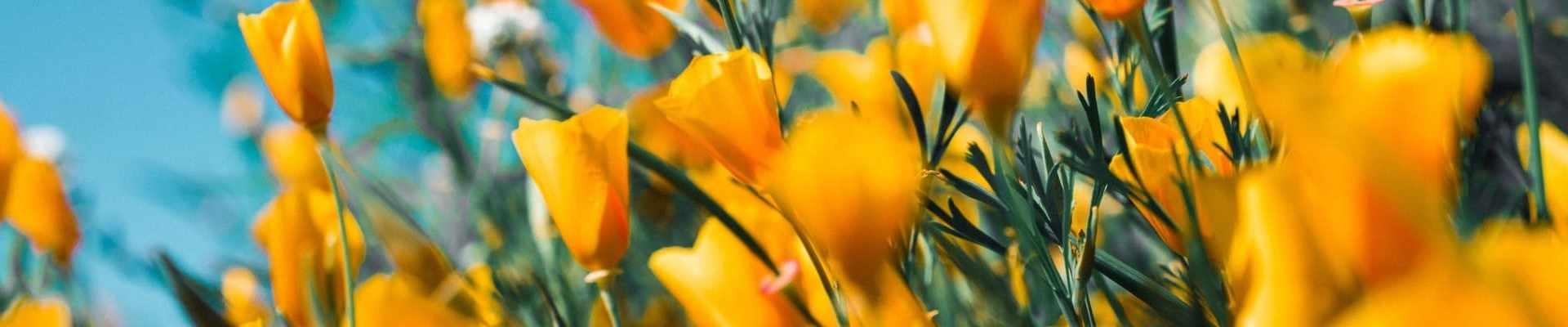 Quieres enviar flores a domicilio te explicamos cómo - Glovo