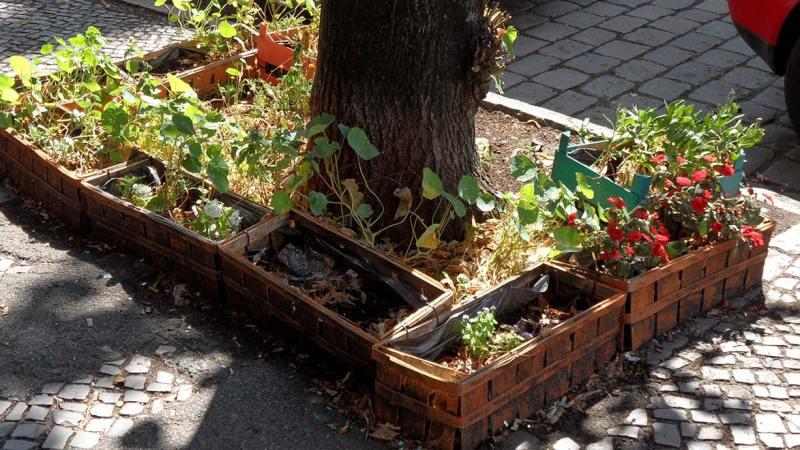 Urban Gardening / Grüne Stadt