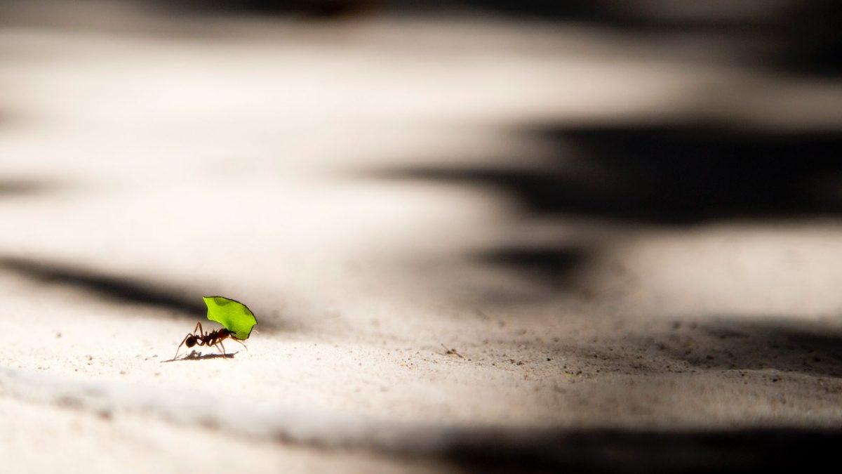 6 gastos hormiga que deberías eliminar hoy mismo