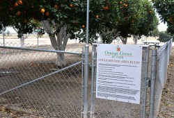 Orange Grove RV Park – RV Services and Buyer Service are Second to None in Bakersfield!