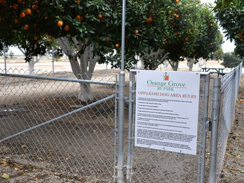Orange Grove RV Park - Dog Park