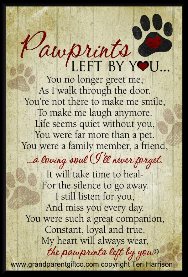 Image result for pet loss