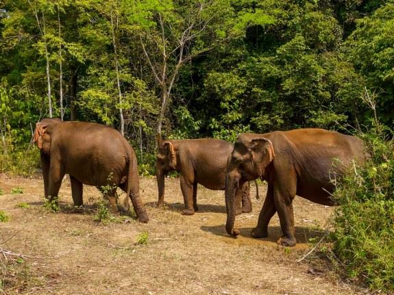 elephant-volunteering-2