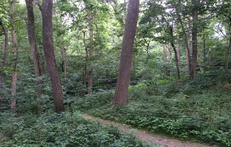 Shawnee Lookout Trail