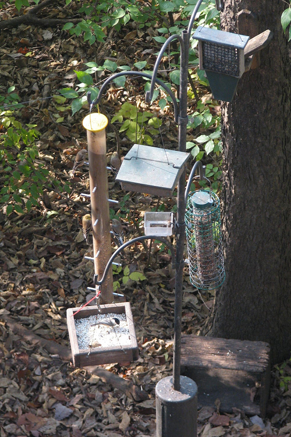 A variety of feeders are used at the Boonshoft Discovery Museum in Dayton, Ohio. (Photo courtesy of drquuxum on Flickr)