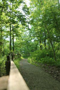 Little Turtle Trail Shawnee Lookout