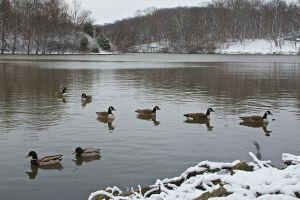 Snow Scene at Sharon Lake