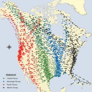U.S. Flyways Map