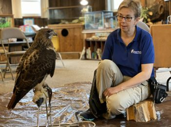 Nature Interpreter Julie Stubbs and Tracker, the red-tailed hawk, at Farbach-Werner Nature Preserve