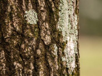 A close-up of a tree trunk in winter. Part of the tree trunk is covered in moss.