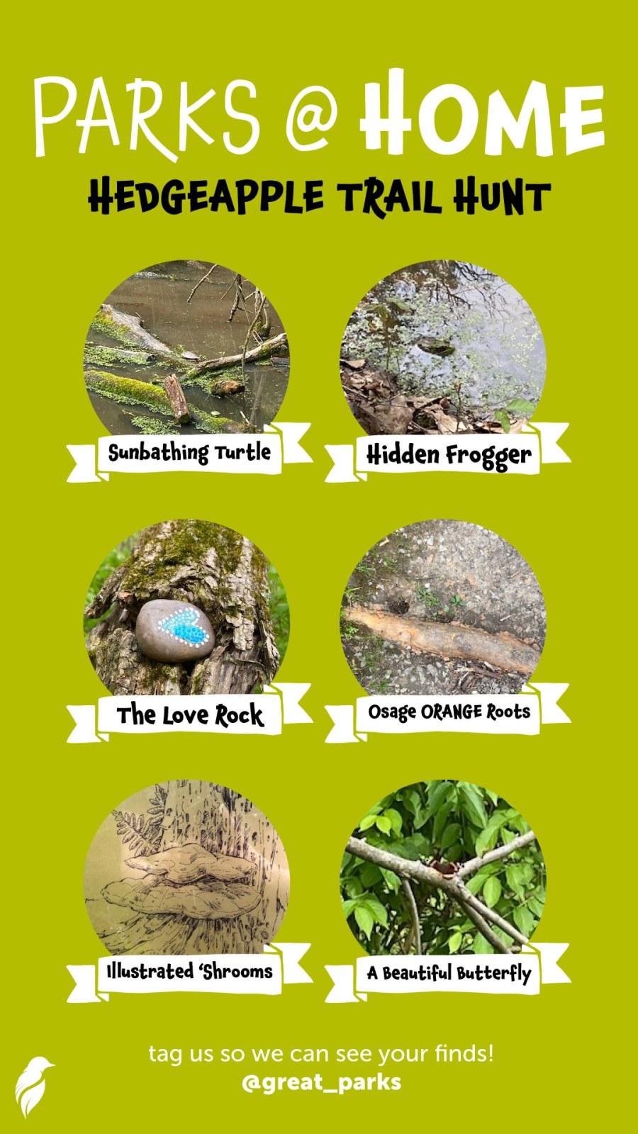 Hedgeapple Trail Hunt