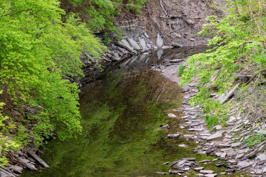 Sharon Woods, Gorge Trail