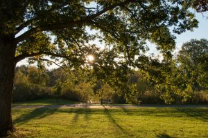 The sun shines through tree branches, over a paved trail.