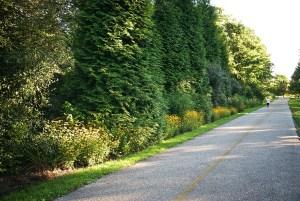 Woodland Mound Shared-Use Trail