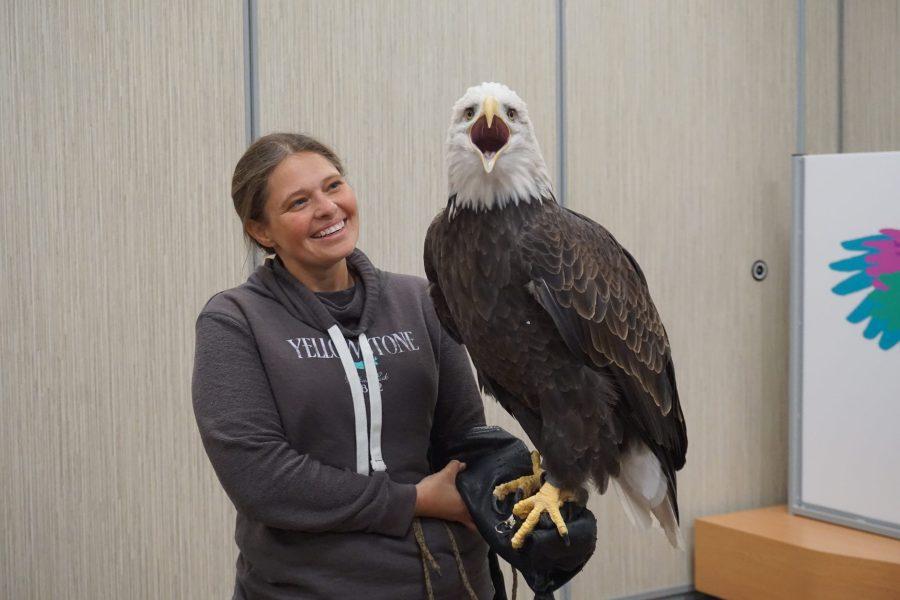 Stephanie Morris and Max the bald eagle