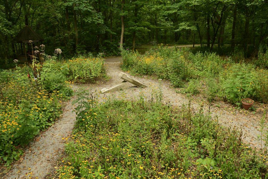 Native wildflowers create a butterfly garden.