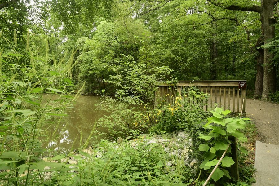 Lush, green plant life surrounds a pond in a park.
