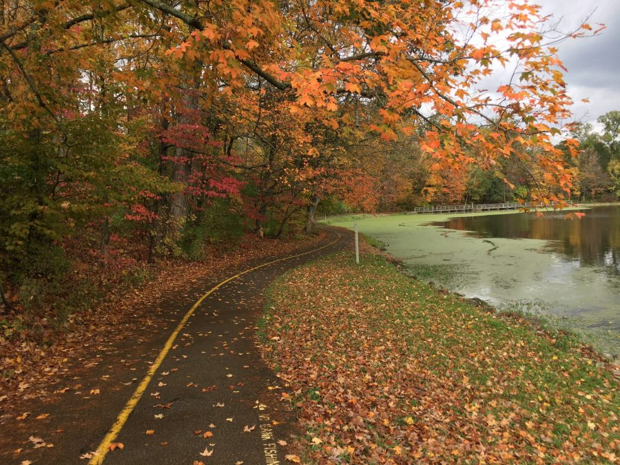 The shared-use trail at Sharon Woods winds around Sharon Lake. The leaves on the trees are orange and red.