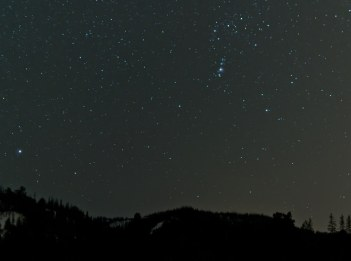 Stars shine over a forest at night.