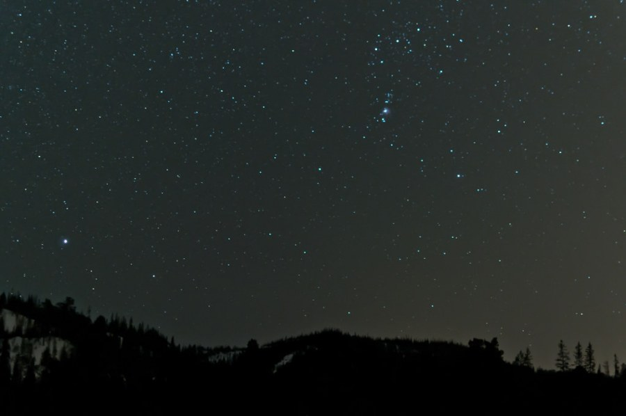 Stars shine brightly over a forest at night.