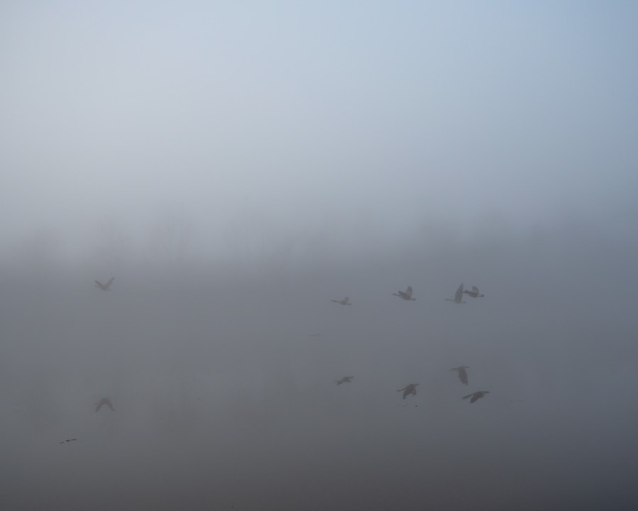 Birds can barely be made out flying over a pond on a foggy winter morning.