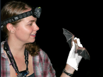Kristen Lear holds a bat species for a study.