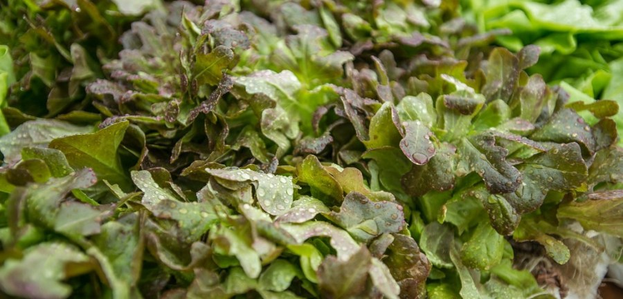 Several leafy green plants sit in a pile.