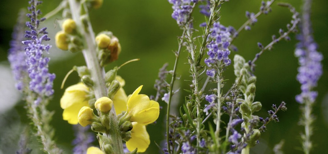 4 ingredientes naturales para aliviar el reuma