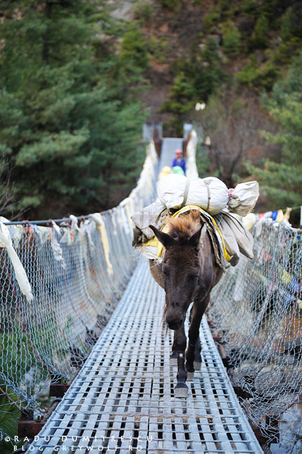08-donkey-suspended-bridge-bhatrang-mountain-biking-annapurna-circuit-foto-radu-dumitrescu