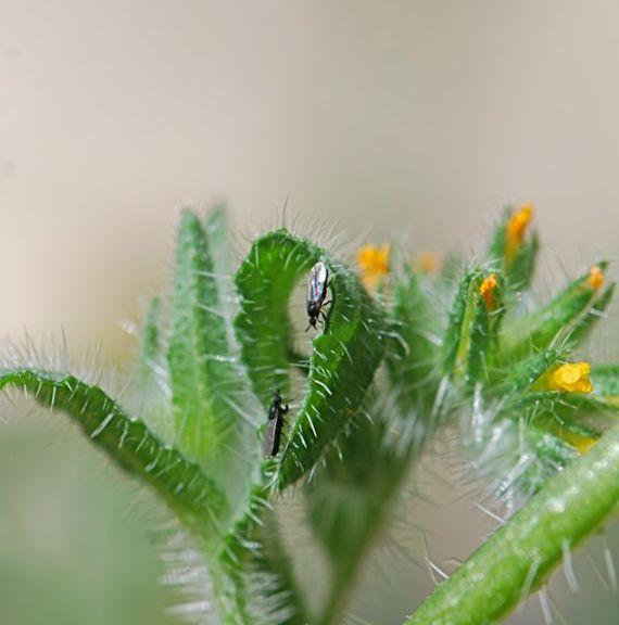 compost-flies