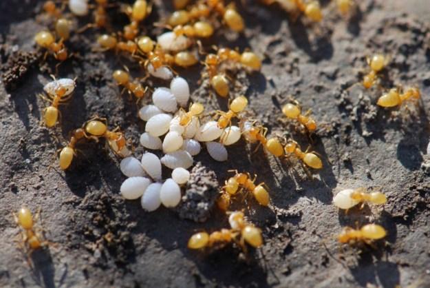 2011-ants