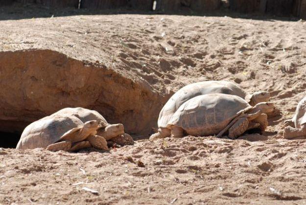 eggs-turtles-lay