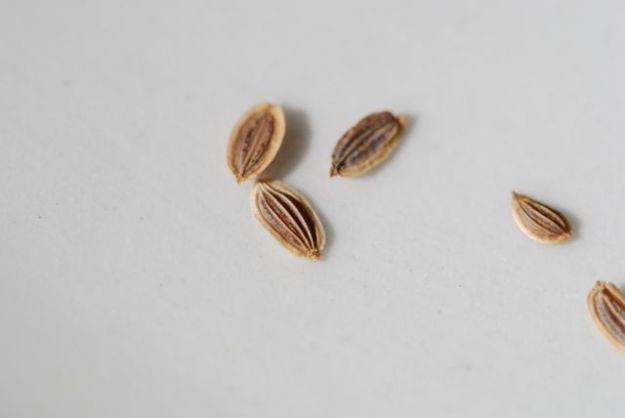 mystery-seeds-152-1