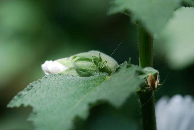 second-green-katydid