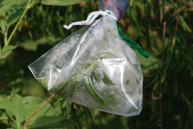 plant-transpiration