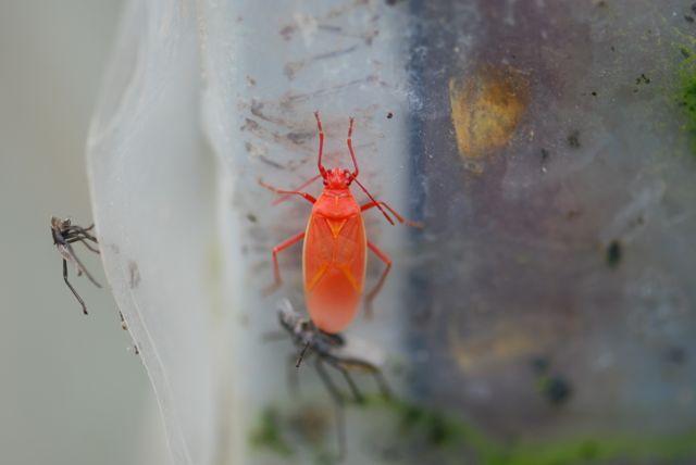 fall-color-bug-1