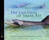 dolphins-of-shark-bay