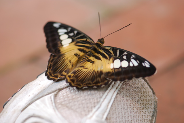 butterfly-on-foot