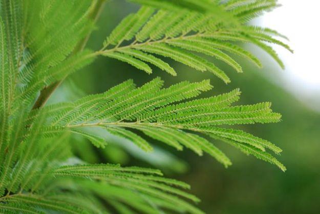 desert-fern-leaves-better