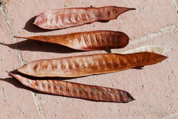 mystery-seed-pods-214
