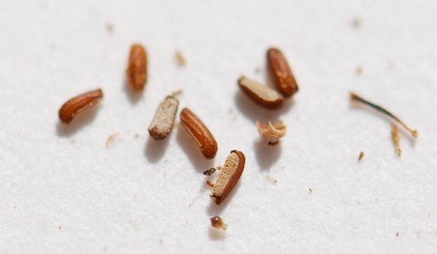 mystery-seeds-215-2