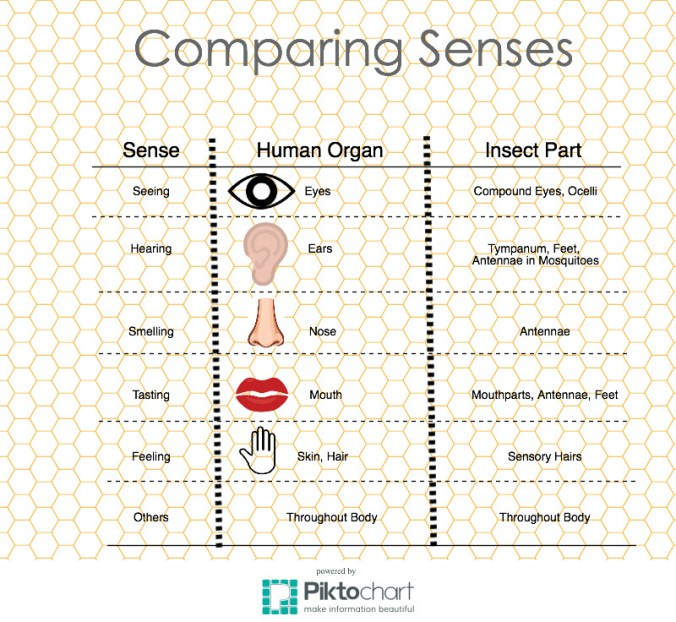 Human-vs-insect-senses-graphic