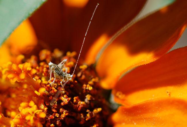 katydid-nymph-close-up