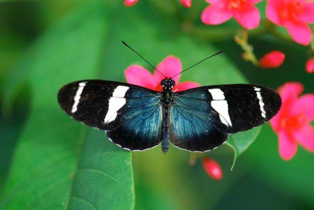 Mystery-butterfly-1-identification