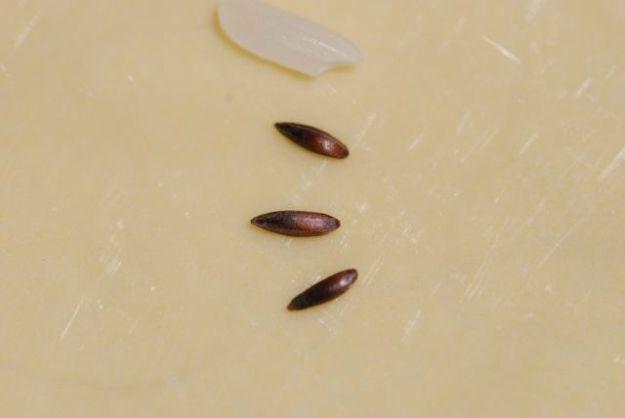 mystery-seeds-248-3
