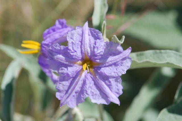 purple-flower-
