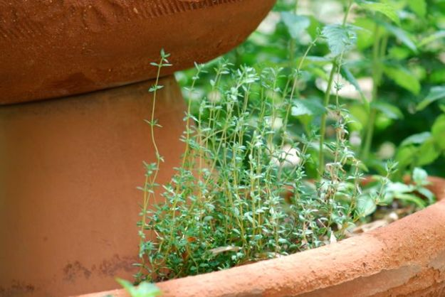 thyme and mint_0028