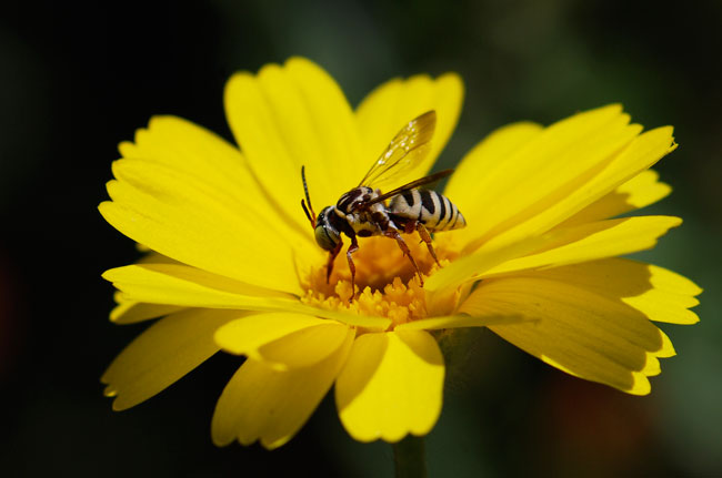 stripy-bee-226
