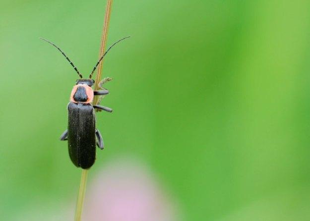 firefly_0365